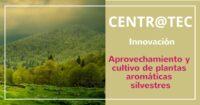 Centr@tec Jornada Innovación: Aprovechamiento y cultivo de plantas aromáticas silvestres: viabilidad económica